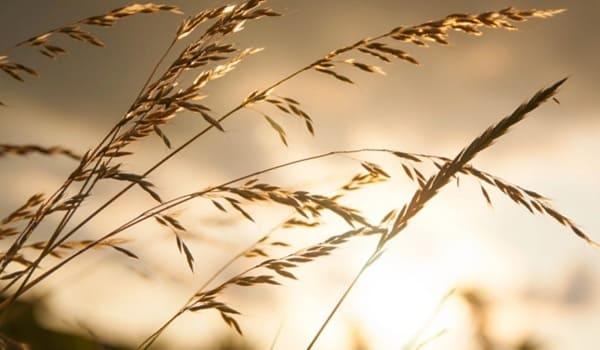 Ветер намерения